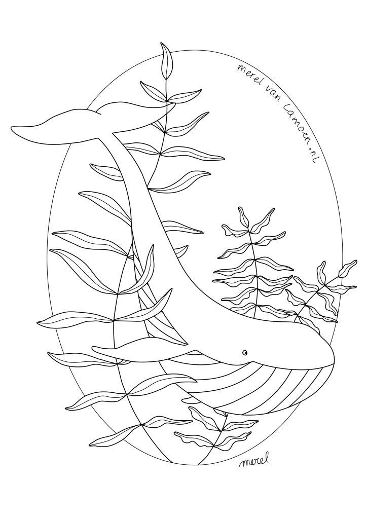 Kleurplaat walvis merel van lamoen